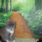 A gray and white kitten sitting on a chair with a painted path behind.
