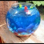Making a Jello Fish Bowl