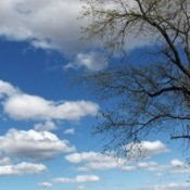 A blue summer sky with white clouds and a tree.