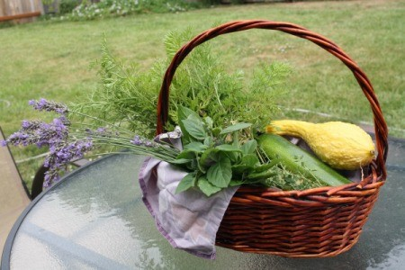 A basket of late summer vegetables and herbs from the garden.