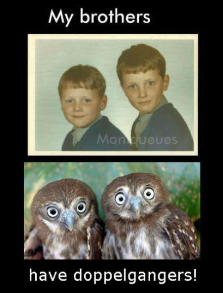 Photo of two young boys with a photo of two owls below.