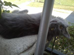 Cat lying on porch.
