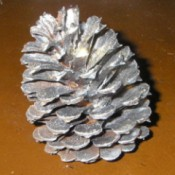 A pinecone painted silver