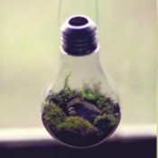 Terrarium hanging, with a closeup.