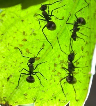 ants on a plant leaf