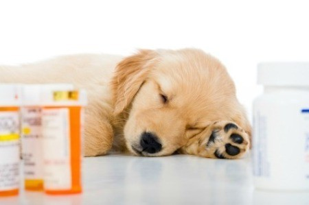 Saving Money on Pet Medications