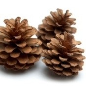 "Easy Scented Pinecone ""Firestarters"""