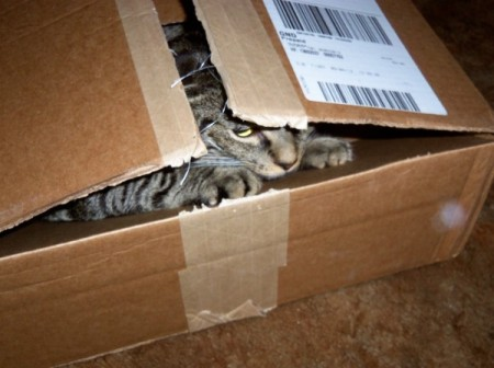 Grey and black tabby inside of a box.