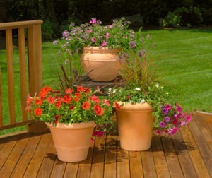 Potted Flower Pots