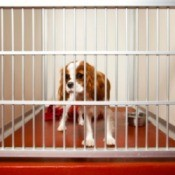 Dog in a cage being boarded.