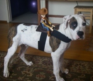 A dog dressed as a horse for Halloween