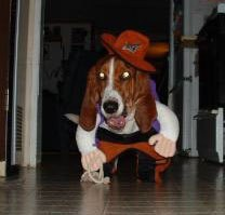 A dog dressed as a cowgirl