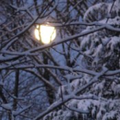 Full moon through snowy trees.