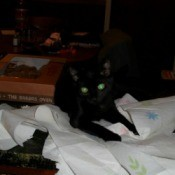 Bindi, a black cat tearing up paper towels.