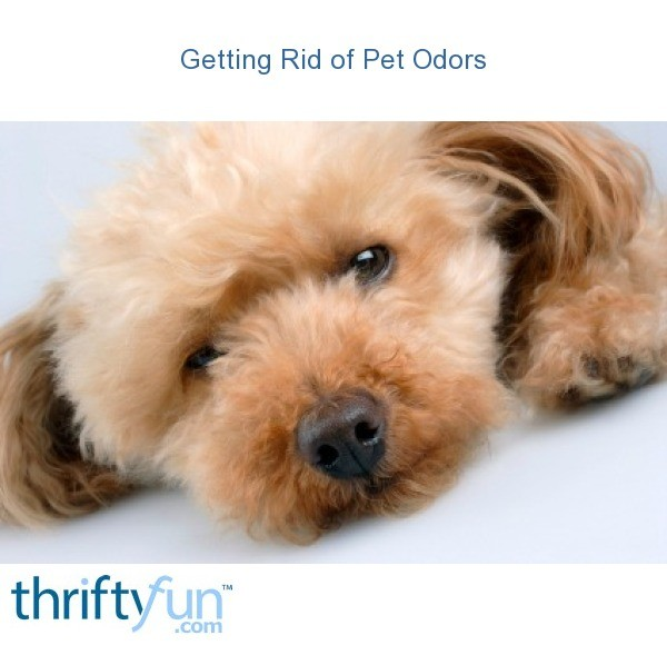 getting rid of pet odors thriftyfun