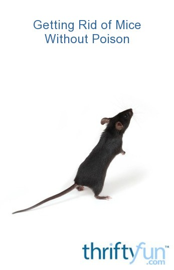 Getting Rid Of Mice Without Poison Thriftyfun