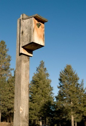 Homemade Birdhouse
