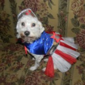 Angel in patriotic dress.