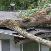 A large tree that has fallen into a house