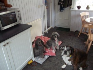 Dogs in kitchen.