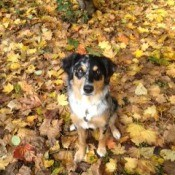 Freida in fall leaves.