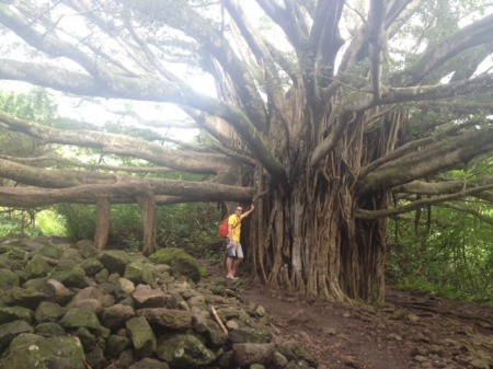 Man standing next to very large Banyan tree.