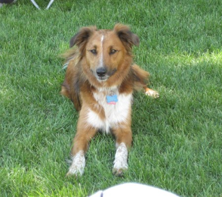 Related Pictures elway the border collie mix pictures 264984