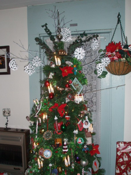 View of tree full length.