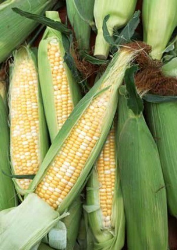 Sweet On Corn