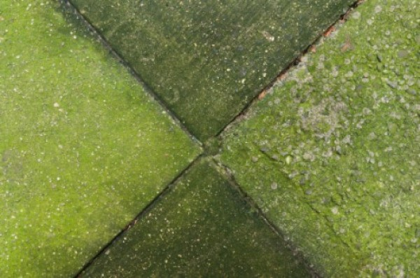 how to clean moss and algae from roof