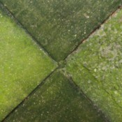 Cleaning Moss and Algae on Concrete