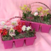 Reusing Petunia Baskets