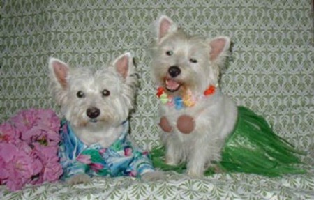 Jerry and Shana