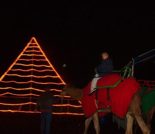 Christmas tree made from lights and boy riding a camel.