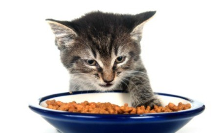 A kitten eating food from a bowl.
