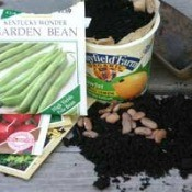 seeds, soil, and recycled yogurt container