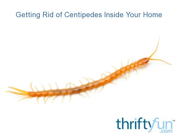Getting rid of centipedes inside your home thriftyfun for How to get rid of centipedes in my bathroom