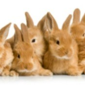 Rabbits, Rabbits and More Rabbits!