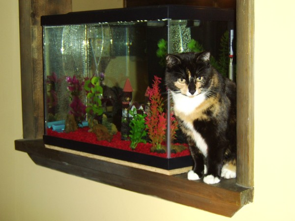 Cat sitting next to aquarium.