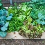 Gardening in Raised Beds