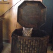 Cat in hamper.