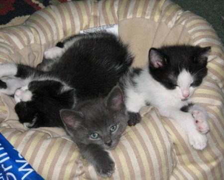 Kittens in bed.