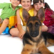A German Shepherd sitting with four happy kids.