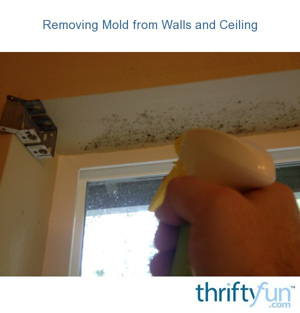 removing mold from painted walls and ceiling thriftyfun. Black Bedroom Furniture Sets. Home Design Ideas