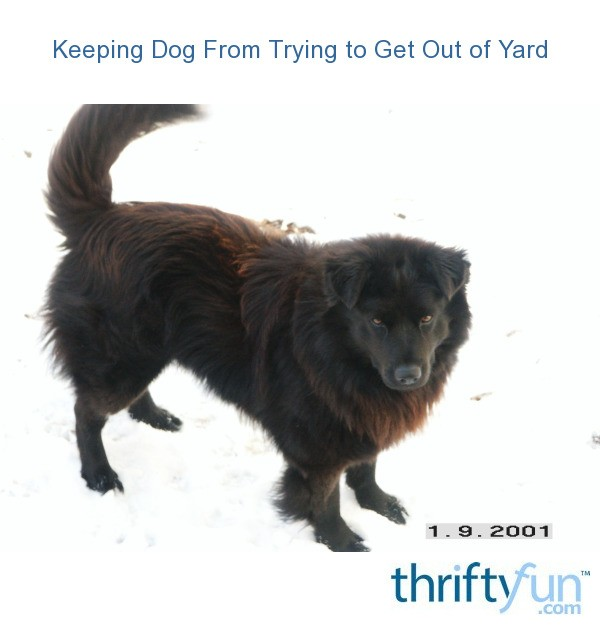 Keeping Dog From Trying To Get Out Of Yard