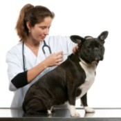 A vet giving a dog a vaccination.