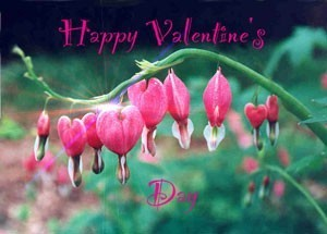 photo card with bleeding heart flowers