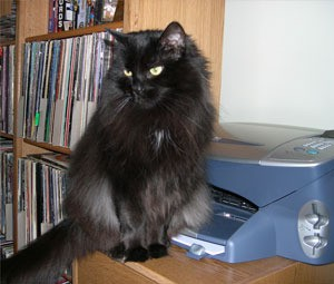 Cat sitting in front of printer.