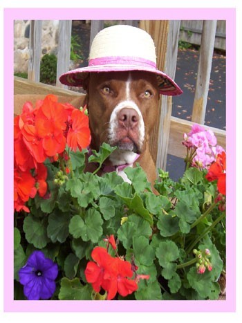 Pit bull in flowers
