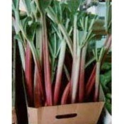 Rhubarb plants in cardboard box